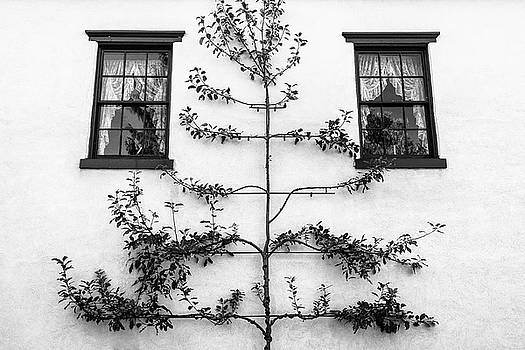 Tree Sculpture by Glenn DiPaola