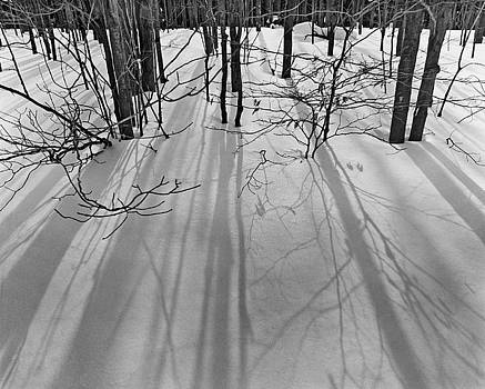 Tree Shadows in Snow by John Gilroy