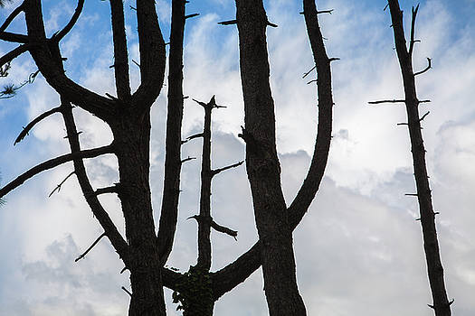 Tree Signs In Time by Matjaz Preseren