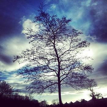 Tree Silhouette. #instagood #instawild by Jennie Davies