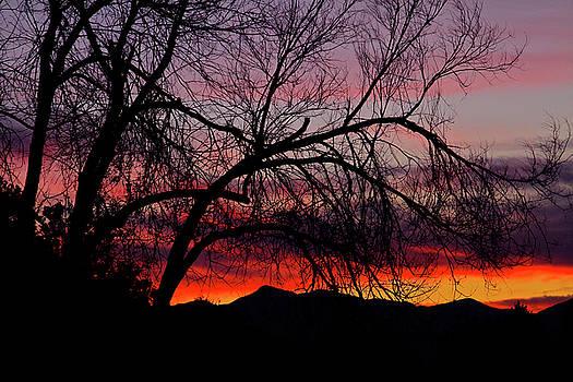 Tree Silhouette by Paul Marto