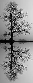 David Pringle - Tree Skeleton Reflection 2