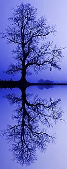 David Pringle - Tree Skeleton Reflection