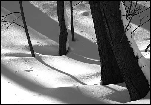 Tree Snow Shadows by Rhea Malinofsky