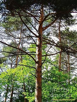 Tree spirit by Peter Kulik