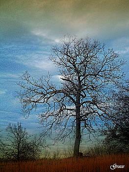 Tree Spirits by Julie Grace