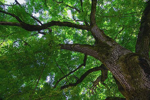 Tree Story 1 by Bonnie Bruno