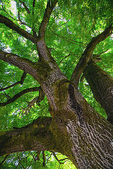 Tree Story 2 by Bonnie Bruno