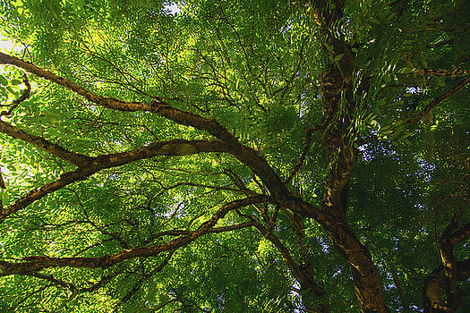Tree Story 3 by Bonnie Bruno