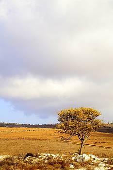 Tree by Studio Zoe