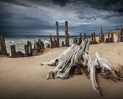 Randall Nyhof - Tree Stump and Pilings on the Beach