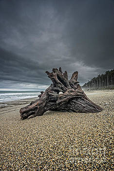 Tree Stump by Paul Woodford
