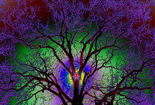 Tree Sun Ice Colors by Warren Sarle
