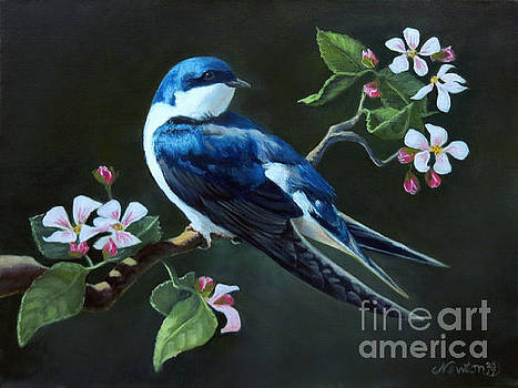 Tree Swallow by Jeanne Newton Schoborg
