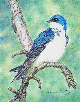 Tree Swallow by Karen Curley