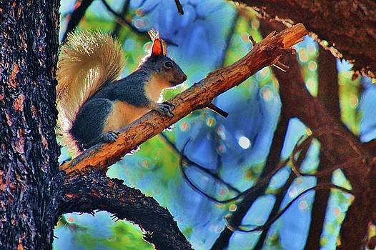 Tree top look out by Helen Carson