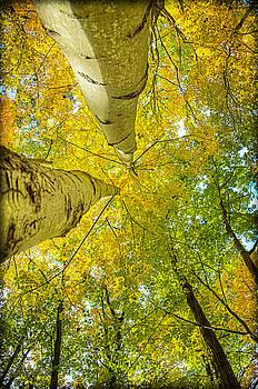 LeeAnn McLaneGoetz McLaneGoetzStudioLLCcom - Tree Tops Huron County Nature Center