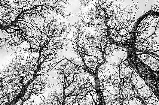 Tree Tops by Sue Smith