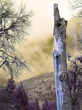 Tree Trunk by Julie Lourenco