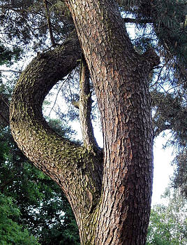 Tree trunk by Maria Woithofer