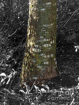 Tree trunk by Tin Tran