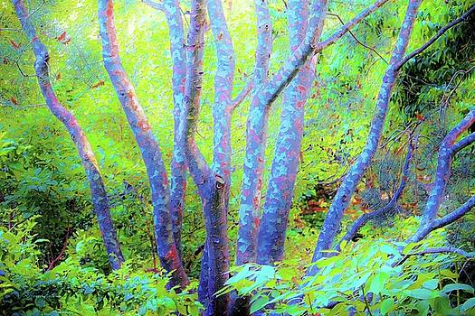 Tree Trunks Blue by Susanna Katherine