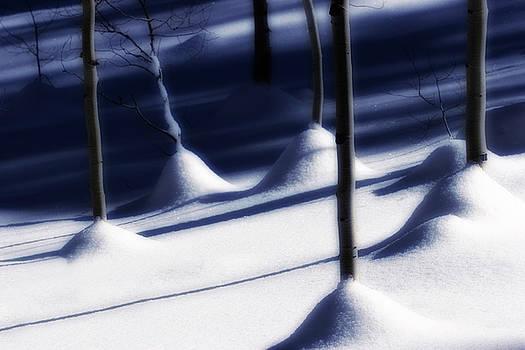 Utah Images - Tree Trunks in Snow