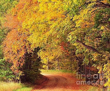 Terri Gostola - Tree Tunnel Heaven
