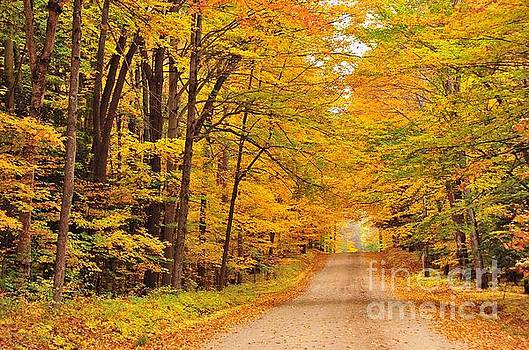 Terri Gostola - Tree Tunnel on a Country Road