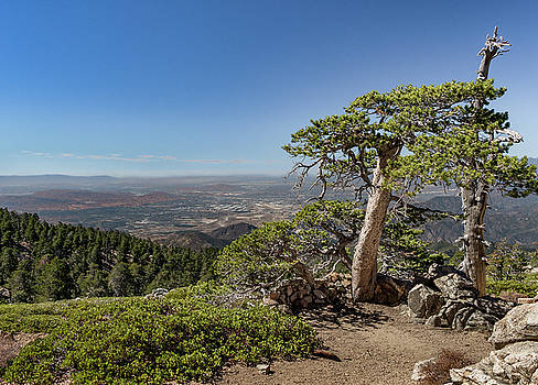 Tree With a View by Ed Clark