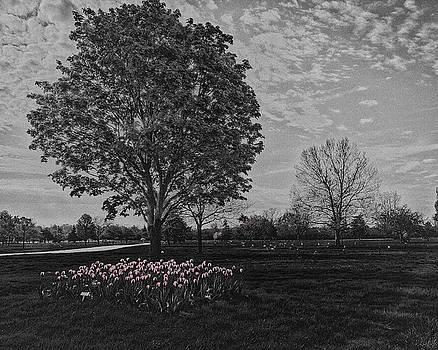 Tree with Tulips #2 by Winnie Chrzanowski