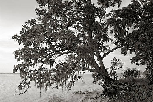 Tree With Two Boys by John Rowe