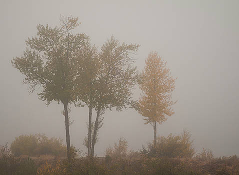 Trees in Fog by Mick Burkey