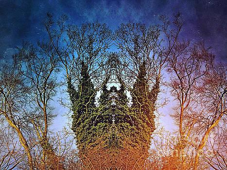 Treebeard by John Gaffen