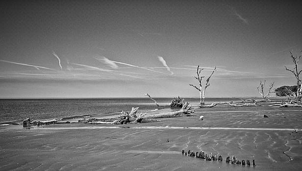 Treed remains  by Sandy Schepis
