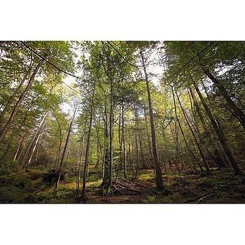 Treeeeeees ❤️ by Stephanie Tomlinson