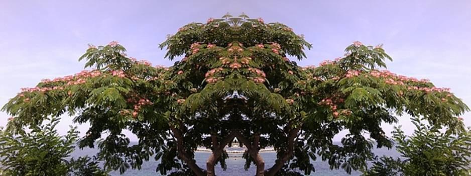 TreeGate Neos Marmaras by Julia Woodman