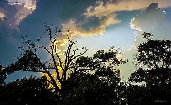 Treeline Silhouette by Brian Wallace