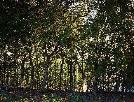 Tommi Trudeau - Trees Along the Fence in Malibu