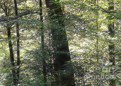Trees Among the Light Bingham Falls Vermont Detail by Felipe Adan Lerma