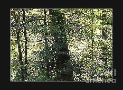 Trees Among the Light Bingham Falls Vermont Detail Poster by Felipe Adan Lerma