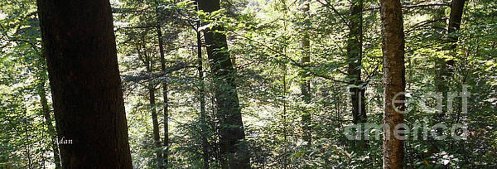 Trees Among the Light Bingham Falls Vermont Panorama by Felipe Adan Lerma