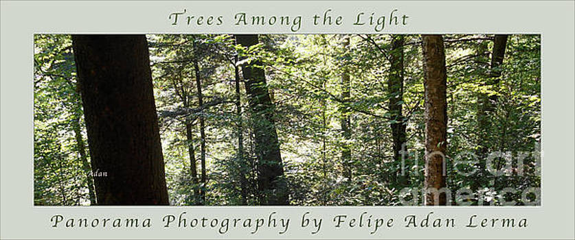 Trees Among the Light Bingham Falls Vermont Panorama Poster by Felipe Adan Lerma
