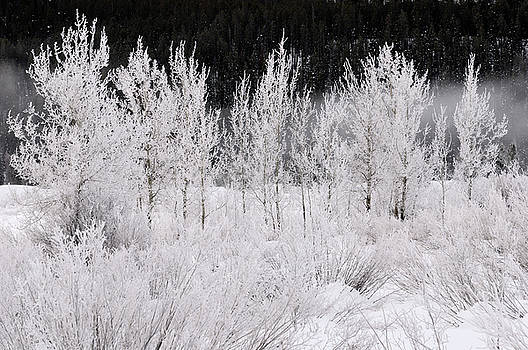 Reimar Gaertner - Trees and bushes covered in frost on a cold morning at Oxbow Ben