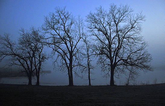 Trees and Fog by Vonda Barnett