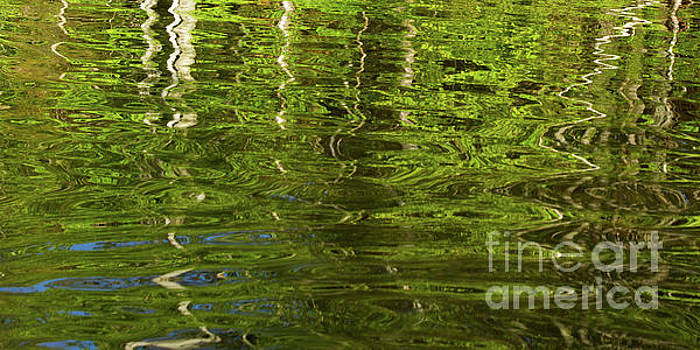 Trees and Leaves Reflection by Denise Lilly