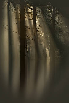 Trees and Light by Andy Astbury