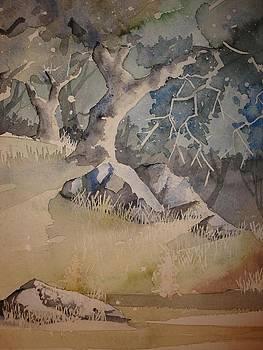 Trees And Light by Steven Holder