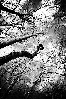 Trees and Vines by Off The Beaten Path Photography - Andrew Alexander