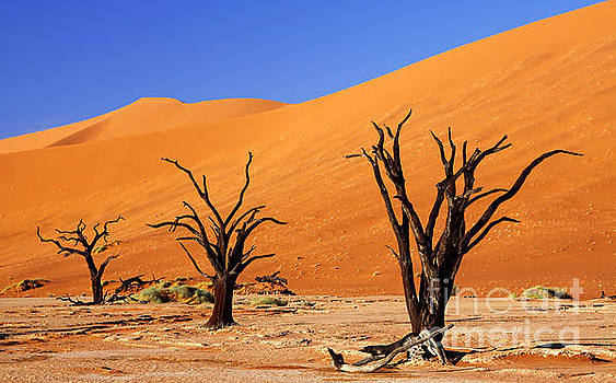 Trees at Dead Vlei, Namibia by Wibke W
